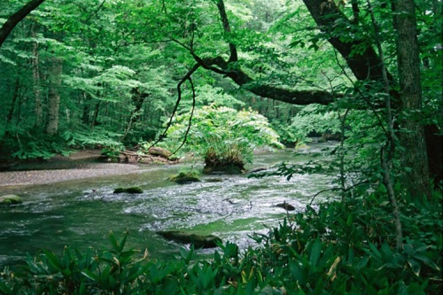 Image Source: http://www.daisakuikeda.org/nature/assets/images/gallery/landscape/D032-aomori-prefecture-japan-august-1994.jpg
